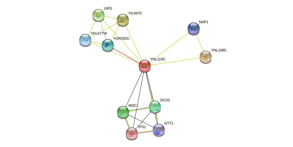 YNL115C protein (Saccharomyces cerevisiae) - STRING interaction network