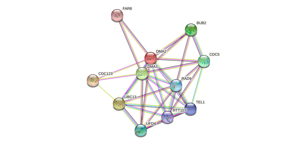 DMA2 protein (Saccharomyces cerevisiae) - STRING interaction network