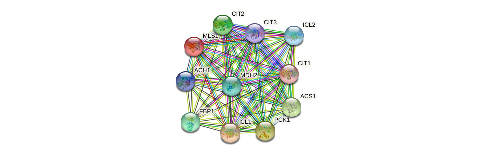 MLS1 protein (Saccharomyces cerevisiae) - STRING interaction network