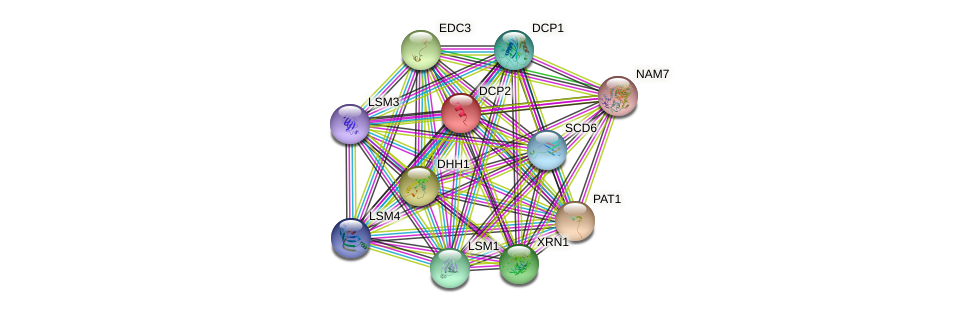 DCP2 protein (Saccharomyces cerevisiae) - STRING interaction network