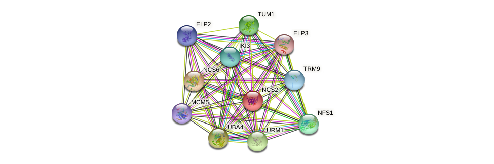 NCS2 protein (Saccharomyces cerevisiae) - STRING interaction network