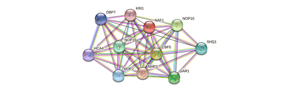 NAF1 protein (Saccharomyces cerevisiae) - STRING interaction network