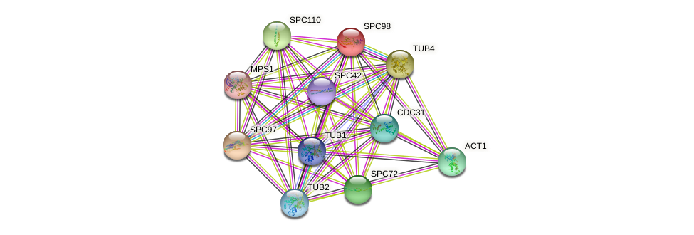 SPC98 protein (Saccharomyces cerevisiae) - STRING interaction network