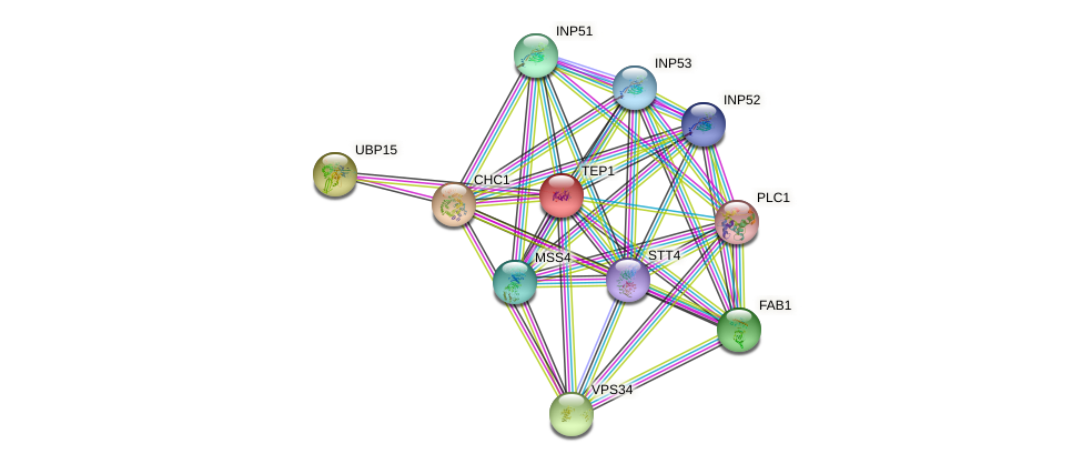 TEP1 protein (Saccharomyces cerevisiae) - STRING interaction network