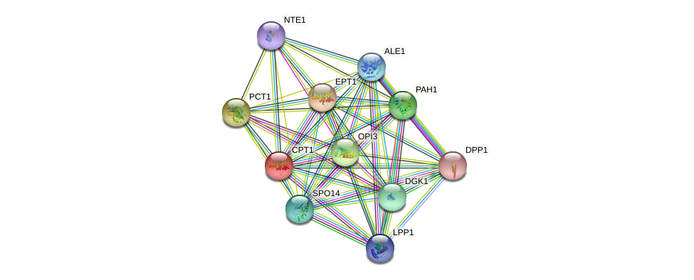 CPT1 protein (Saccharomyces cerevisiae) - STRING interaction network