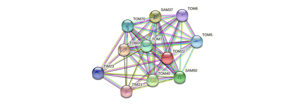 TOM22 protein (Saccharomyces cerevisiae) - STRING interaction network