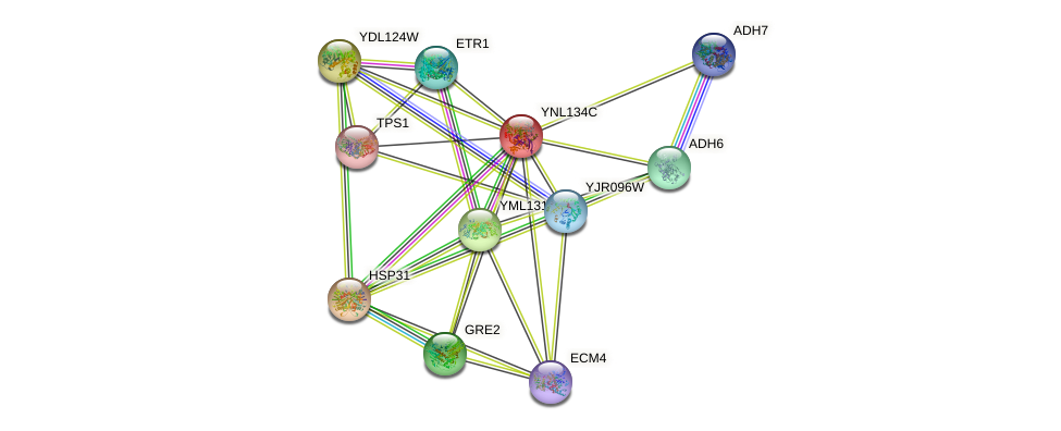 YNL134C protein (Saccharomyces cerevisiae) - STRING interaction network