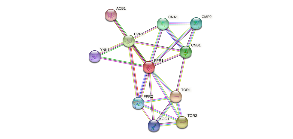 FPR1 protein (Saccharomyces cerevisiae) - STRING interaction network