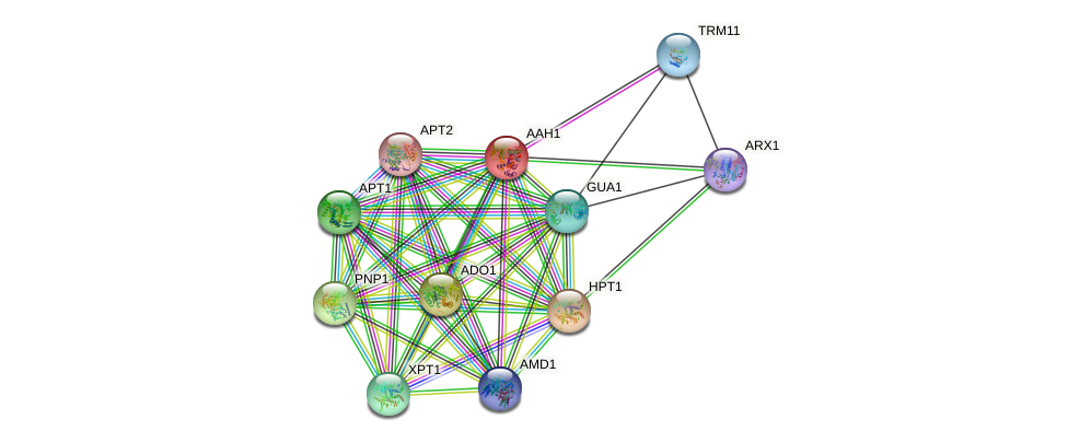 AAH1 protein (Saccharomyces cerevisiae) - STRING interaction network