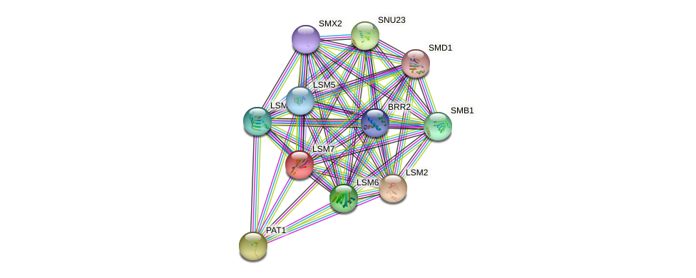 LSM7 protein (Saccharomyces cerevisiae) - STRING interaction network