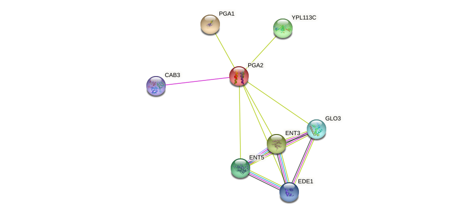 PGA2 protein (Saccharomyces cerevisiae) - STRING interaction network