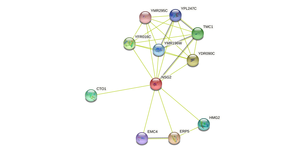 NSG2 protein (Saccharomyces cerevisiae) - STRING interaction network