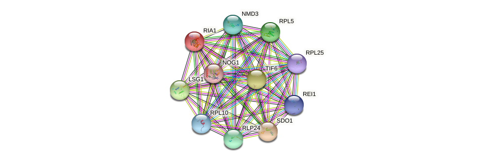 RIA1 protein (Saccharomyces cerevisiae) - STRING interaction network