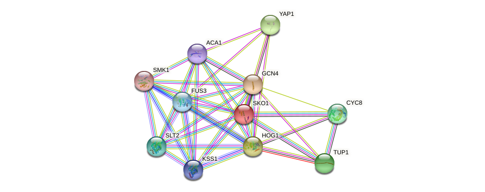 SKO1 protein (Saccharomyces cerevisiae) - STRING interaction network