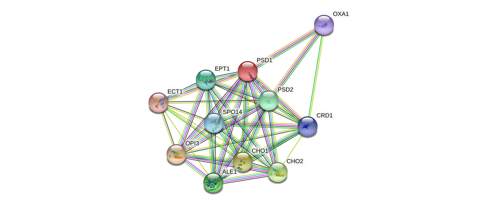 PSD1 protein (Saccharomyces cerevisiae) - STRING interaction network