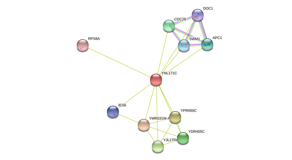 YNL171C protein (Saccharomyces cerevisiae) - STRING interaction network