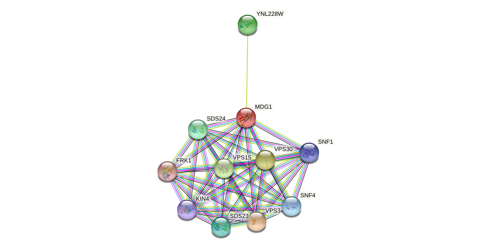 MDG1 protein (Saccharomyces cerevisiae) - STRING interaction network