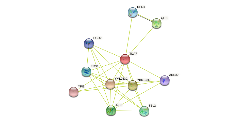TDA7 protein (Saccharomyces cerevisiae) - STRING interaction network