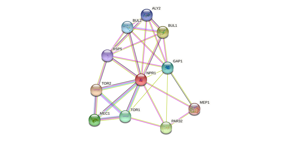 NPR1 protein (Saccharomyces cerevisiae) - STRING interaction network
