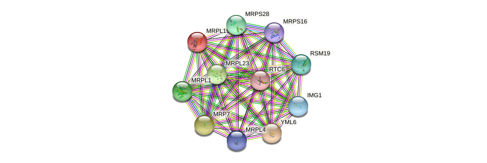 MRPL19 protein (Saccharomyces cerevisiae) - STRING interaction network