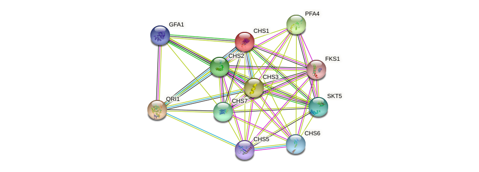 CHS1 protein (Saccharomyces cerevisiae) - STRING interaction network