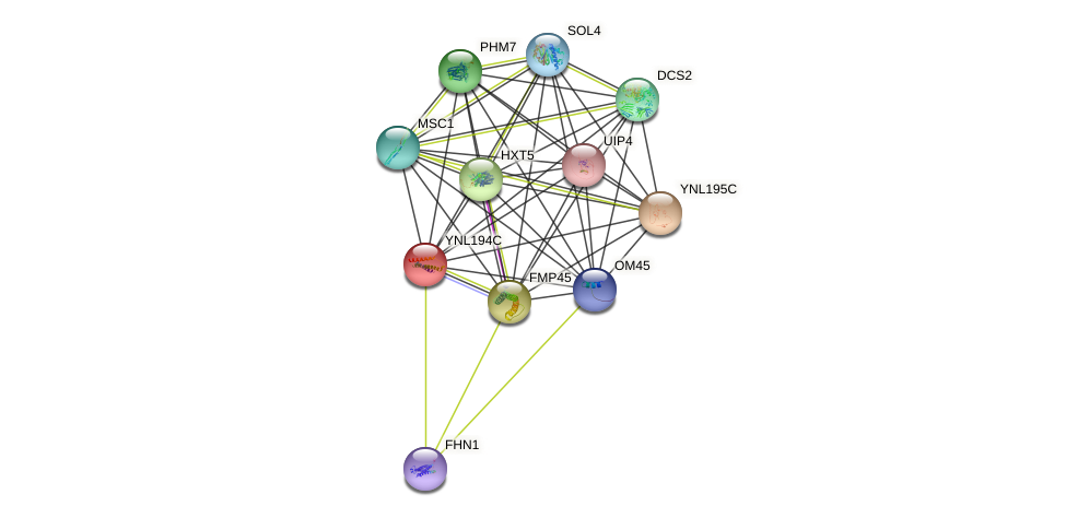YNL194C protein (Saccharomyces cerevisiae) - STRING interaction network