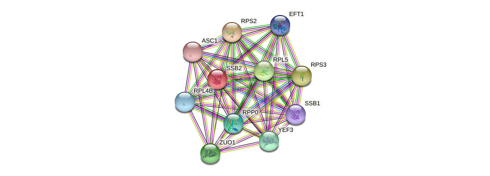 SSB2 protein (Saccharomyces cerevisiae) - STRING interaction network