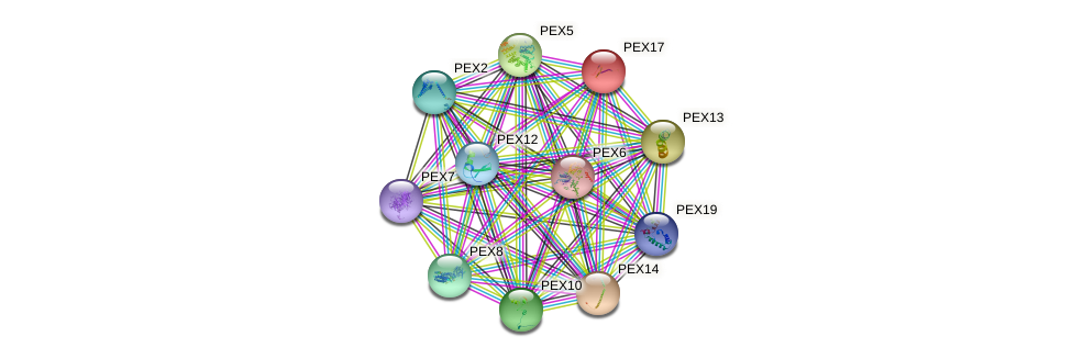 PEX17 protein (Saccharomyces cerevisiae) - STRING interaction network