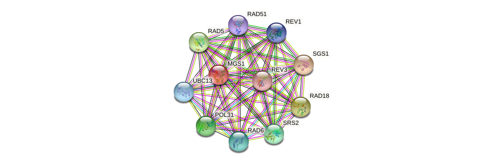 MGS1 protein (Saccharomyces cerevisiae) - STRING interaction network