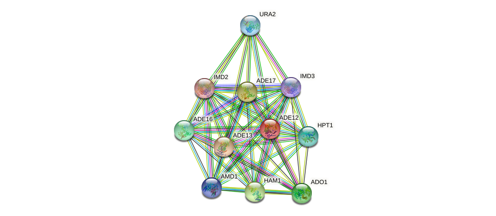 ADE12 protein (Saccharomyces cerevisiae) - STRING interaction network