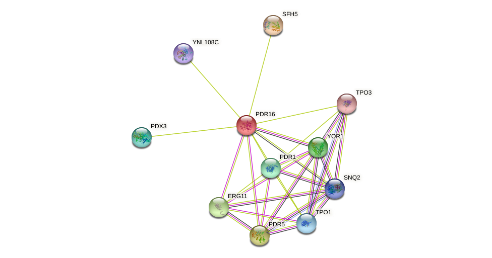 PDR16 protein (Saccharomyces cerevisiae) - STRING interaction network