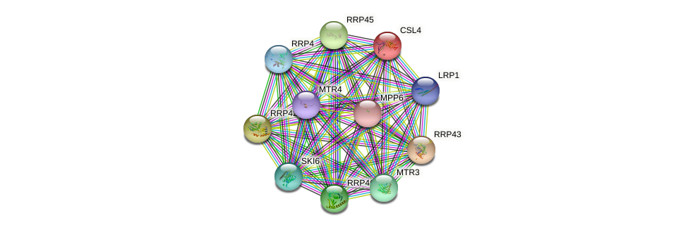 CSL4 protein (Saccharomyces cerevisiae) - STRING interaction network