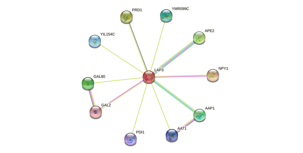 LAP3 protein (Saccharomyces cerevisiae) - STRING interaction network