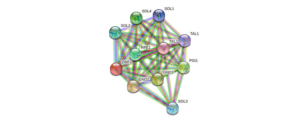 ZWF1 protein (Saccharomyces cerevisiae) - STRING interaction network