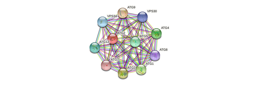 ATG2 protein (Saccharomyces cerevisiae) - STRING interaction network