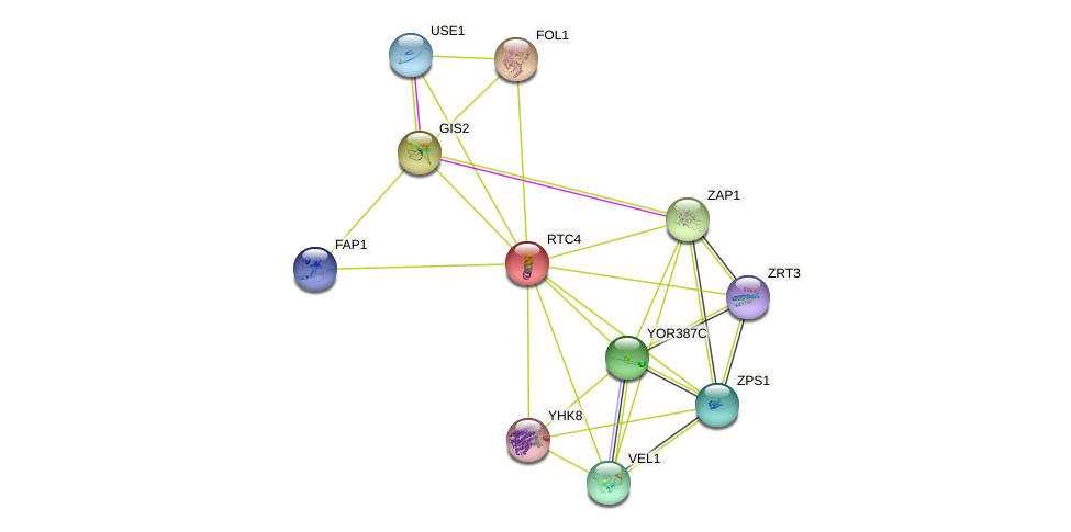 RTC4 protein (Saccharomyces cerevisiae) - STRING interaction network