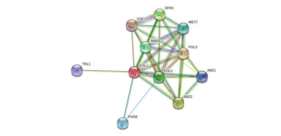 FOL1 protein (Saccharomyces cerevisiae) - STRING interaction network