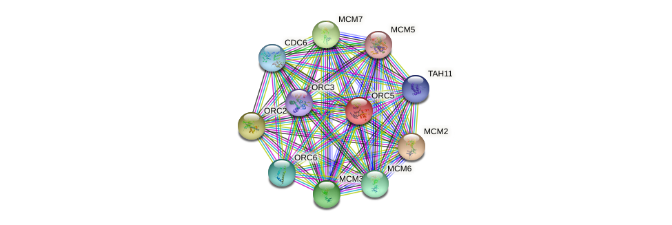 ORC5 protein (Saccharomyces cerevisiae) - STRING interaction network