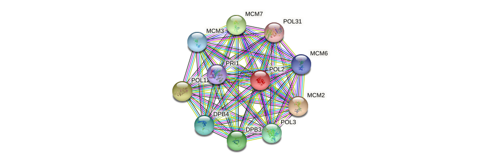 POL2 protein (Saccharomyces cerevisiae) - STRING interaction network