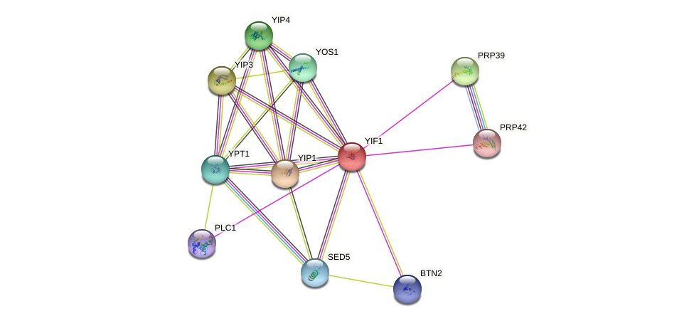 YIF1 protein (Saccharomyces cerevisiae) - STRING interaction network