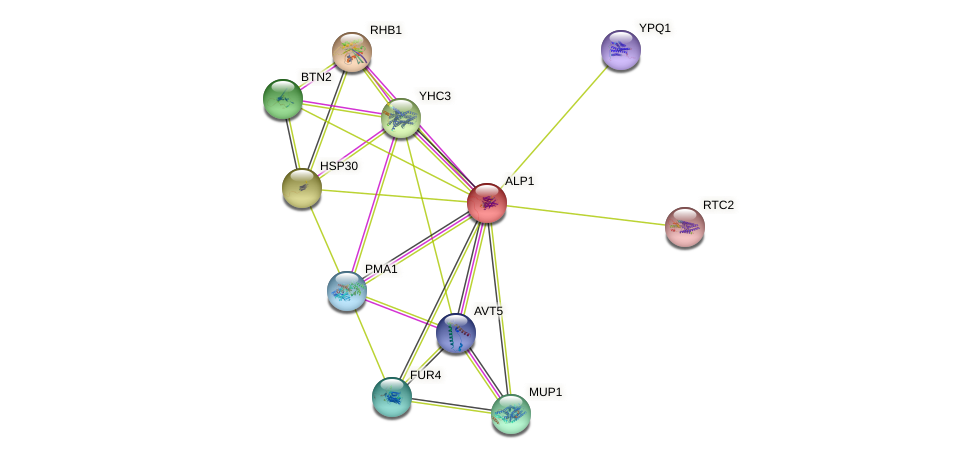 ALP1 protein (Saccharomyces cerevisiae) - STRING interaction network