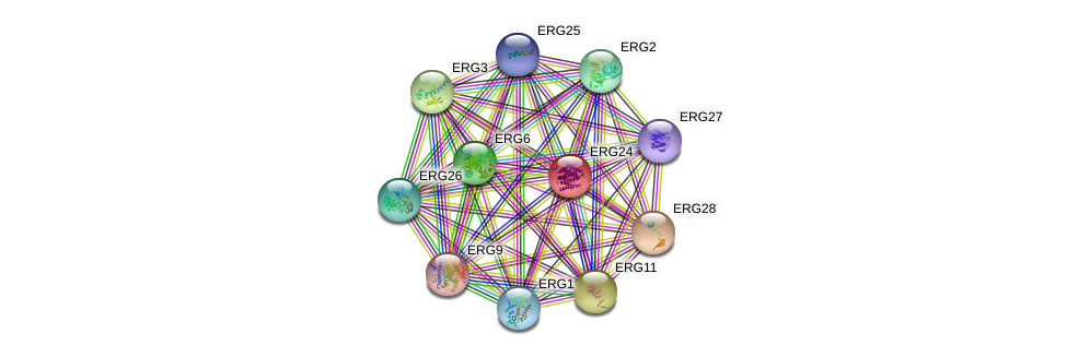 ERG24 protein (Saccharomyces cerevisiae) - STRING interaction network
