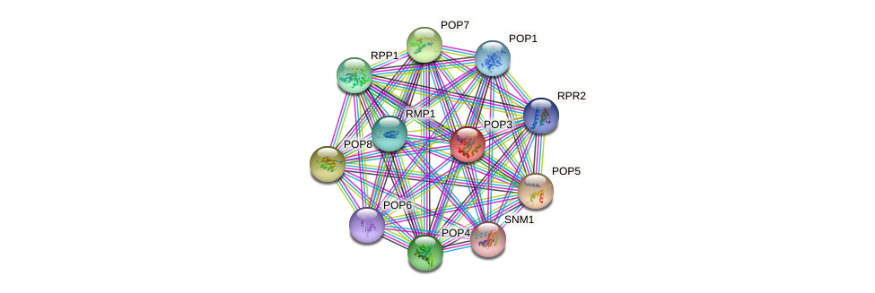 POP3 protein (Saccharomyces cerevisiae) - STRING interaction network