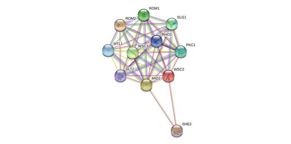 WSC2 protein (Saccharomyces cerevisiae) - STRING interaction network