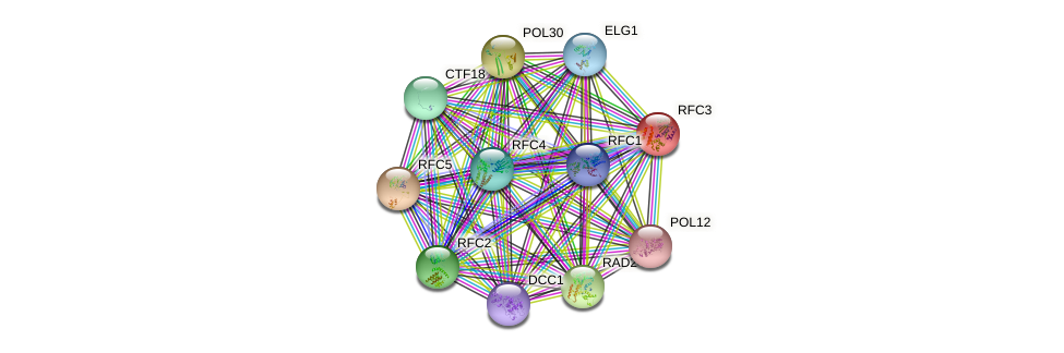 RFC3 protein (Saccharomyces cerevisiae) - STRING interaction network