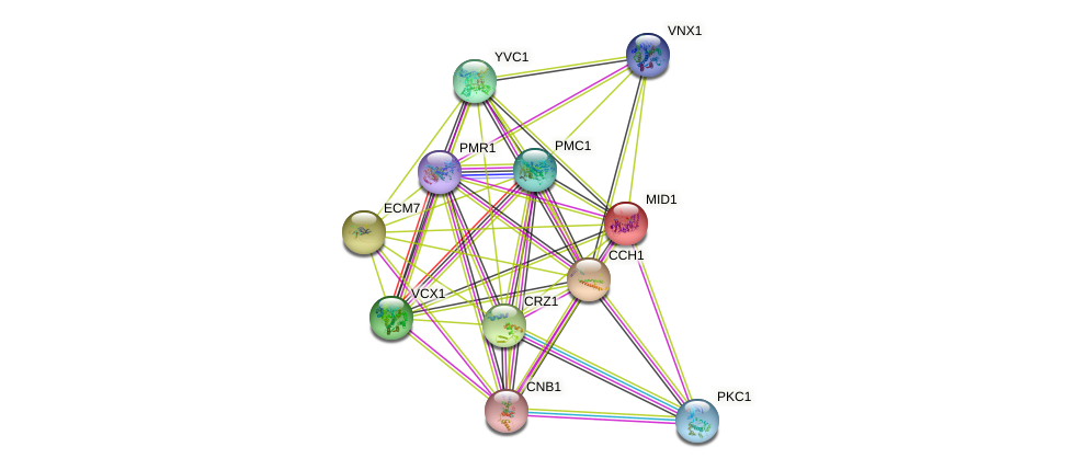 MID1 protein (Saccharomyces cerevisiae) - STRING interaction network