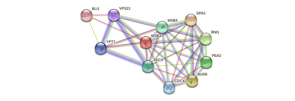 MSB3 protein (Saccharomyces cerevisiae) - STRING interaction network