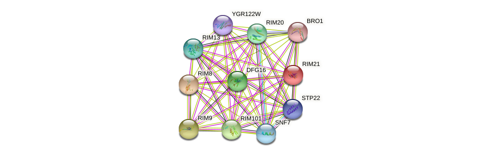 RIM21 protein (Saccharomyces cerevisiae) - STRING interaction network
