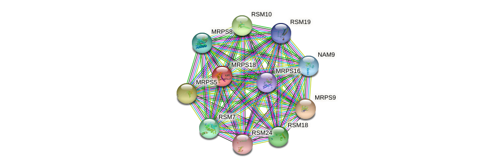MRPS18 protein (Saccharomyces cerevisiae) - STRING interaction network