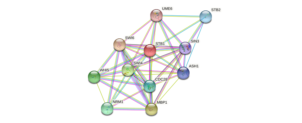 STB1 protein (Saccharomyces cerevisiae) - STRING interaction network